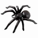 Grosse araignée Mygale à poser