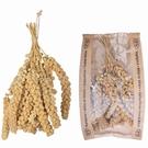 Grappe de millet de sétaire pour oiseaux